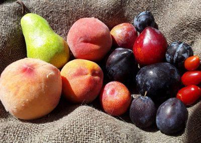 Jeremy's Fruit Stand & Market