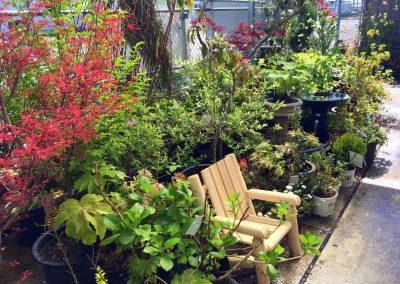Kaija's Garden & Pet